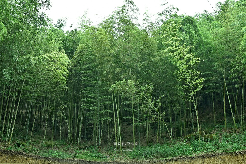 【南投竹山景點】大鞍療癒之森 走進忘憂竹林、茶農舍茶園,來段與自己對話的小旅行