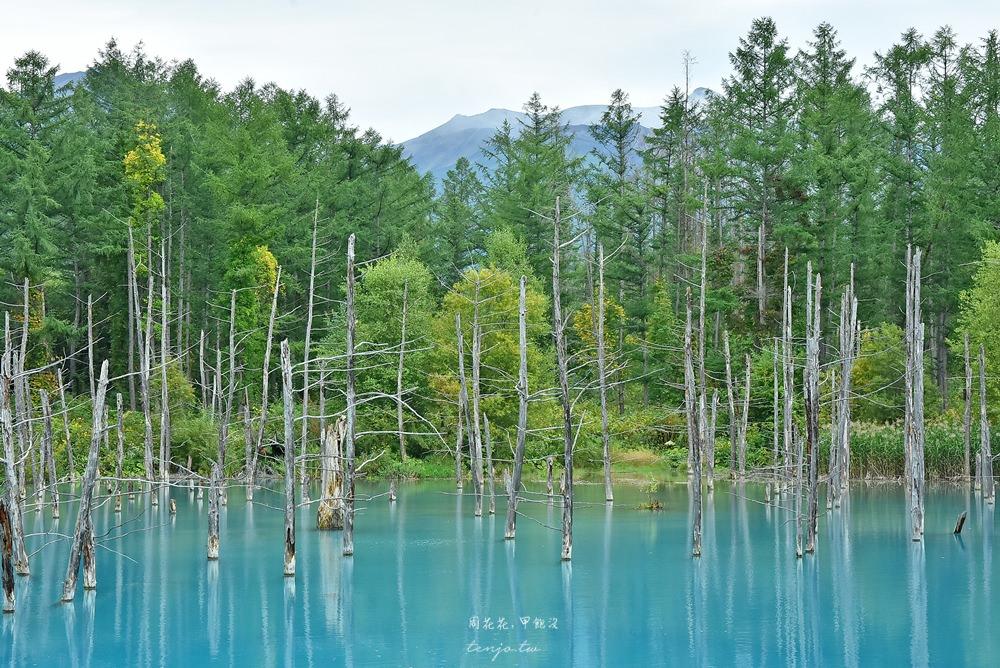 【北海道景點】美瑛青池、白鬚瀑布 蘋果桌布裡的夢幻水藍色,一生必去日本絕景