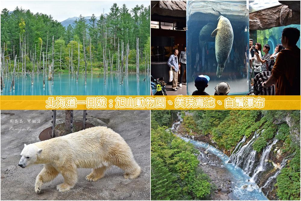 【北海道一日遊】札幌出發一日團:旭山動物園、美瑛青池、白鬚瀑布,專車接送包午餐吃到飽