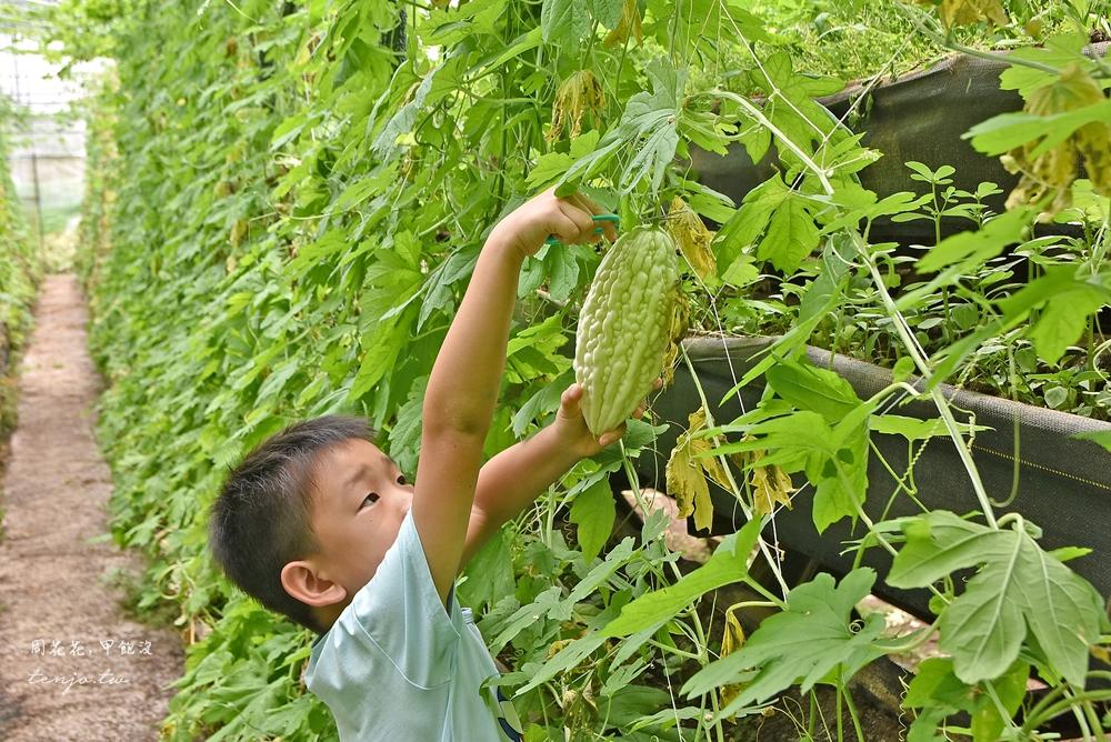 【新竹關西景點】金勇DIY休閒農場 免門票免費入場!親子旅遊採番茄草莓、苦瓜小黃瓜