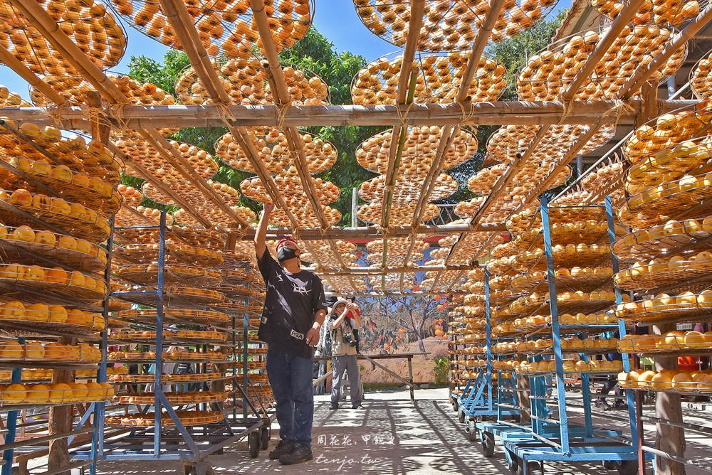 【新竹新埔景點】味衛佳柿餅觀光農場 免門票免費入場!秋冬限定橘紅柿子海