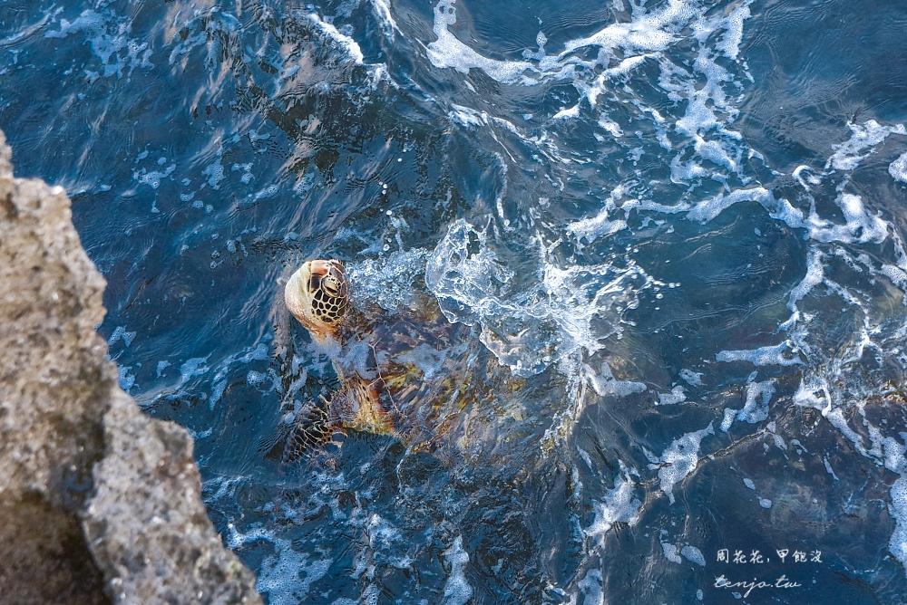【小琉球景點推薦】龍蝦洞 人氣ig拍照景點!天然珊瑚礁岩海蝕溝,海龜多到近在腳邊