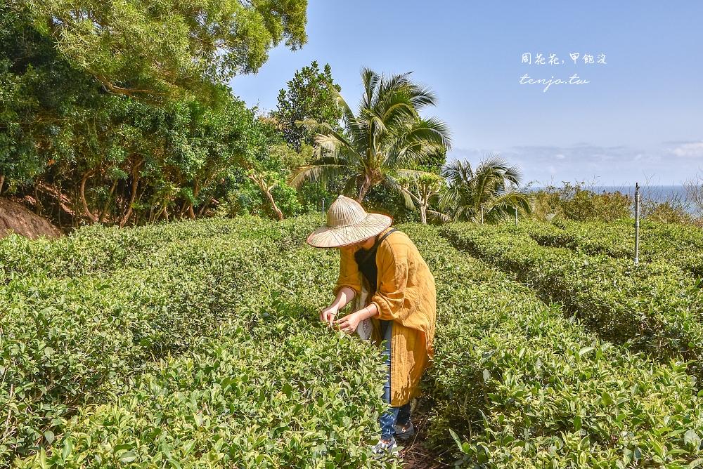【屏東景點推薦】滿州港口社區生態旅遊 百年港口茶採茶品茗、在地食材媽媽手做風味餐
