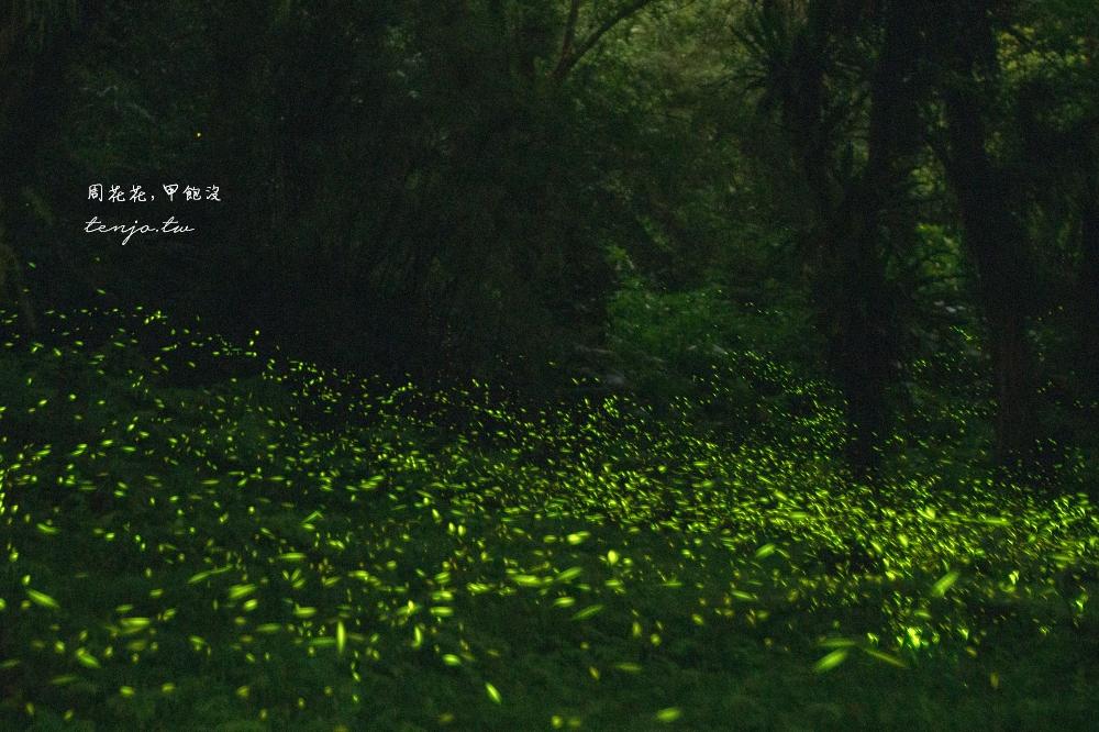 【新北烏來旅遊推薦】雲仙樂園 大台北最夢幻的螢火蟲景點!如何前往交通方式門票優惠