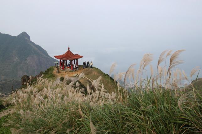 茶壺山芒草